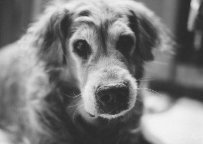 Bailey, our Golden Retriever